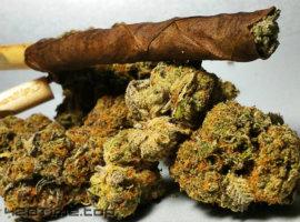 Шишки, марихуана, конопля