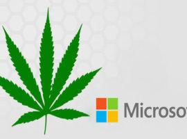 microsoft и марихуана