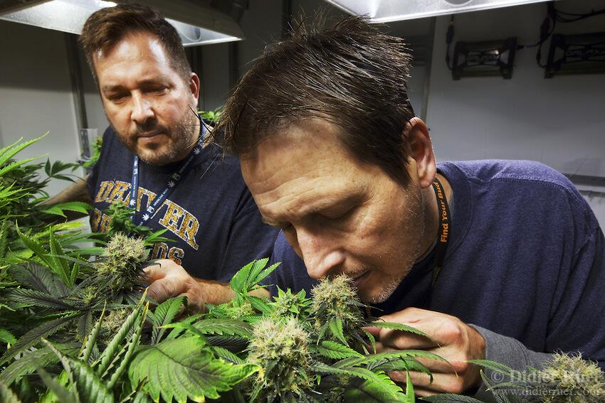 Замаскировать запах конопли марихуана листья тонкие