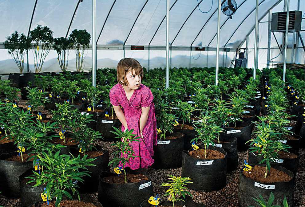 медицинская марихуана, детская эпилепсия