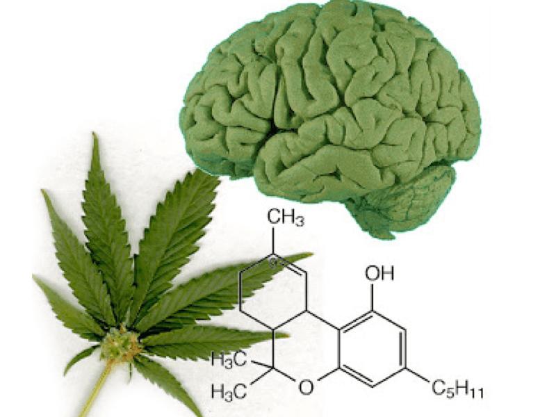 Как лечит марихуана