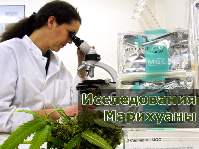 Исследования марихуаны
