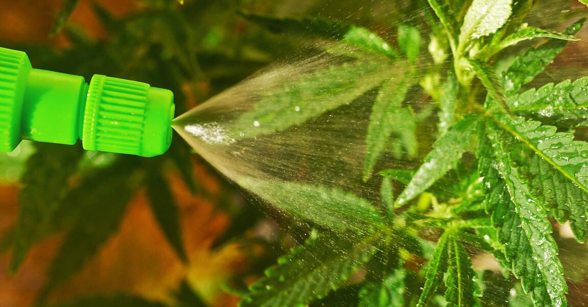 Чем удобрить марихуану фото сжигания конопли