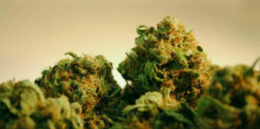 Самые сильные сорта марихуаны букет из марихуаны