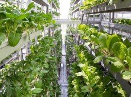 выращивание на вертикальной ферме