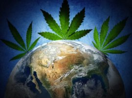 объём рынка марихуаны