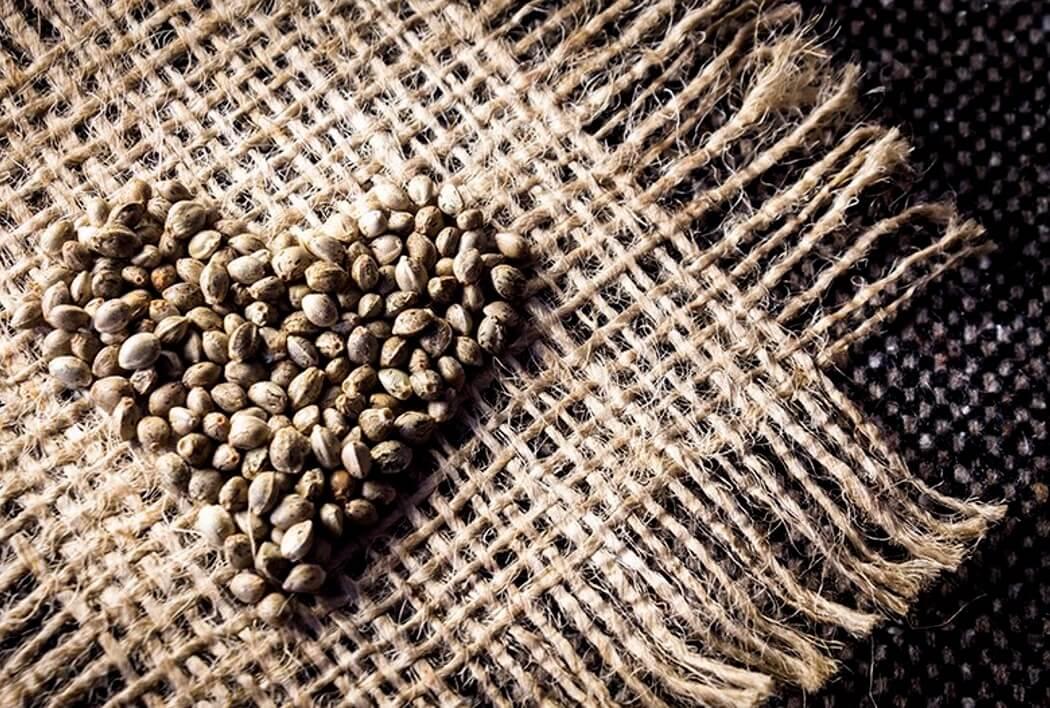 марихуана семена конопли