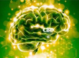 лечение КБД марихуана