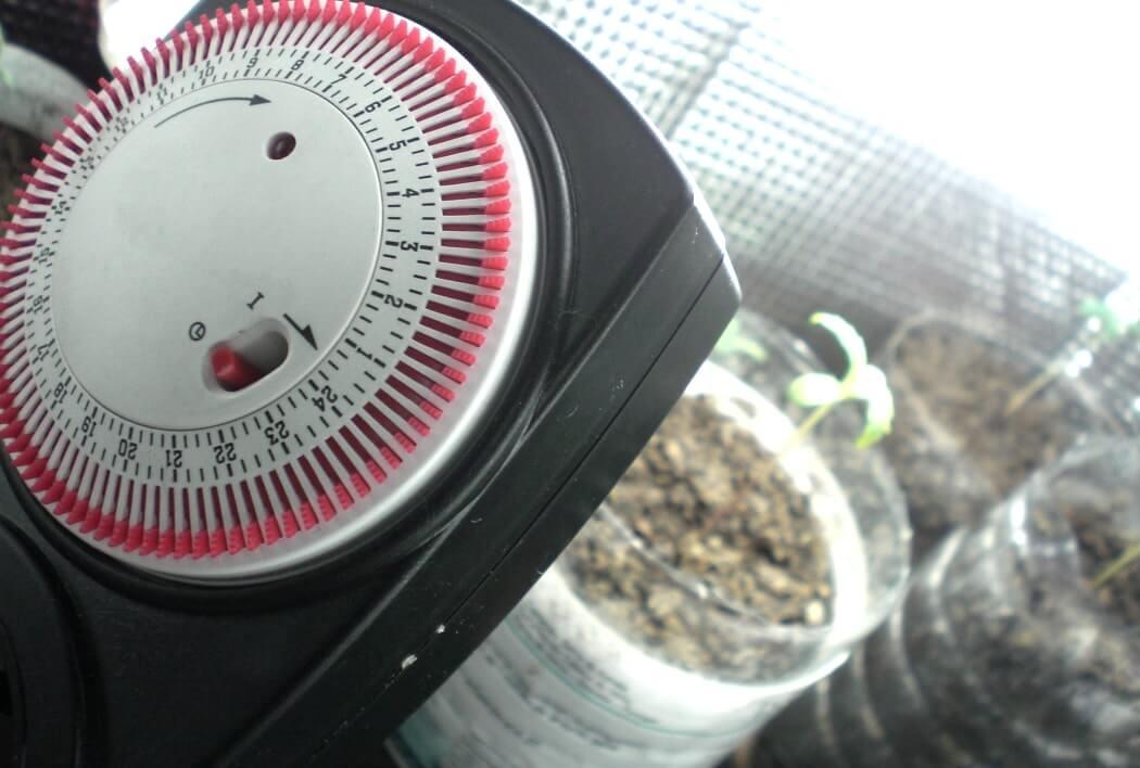 выращивание конопли освещение