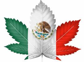 Мексика на пути легализации марихуаны