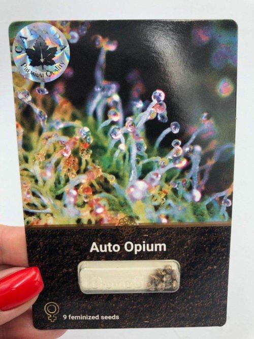 Лицевая сторона Авто Опиум