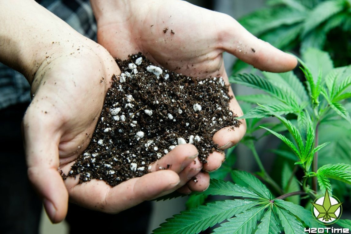 Какой грунт нужен чтобы вырастить марихуану в аутдоре