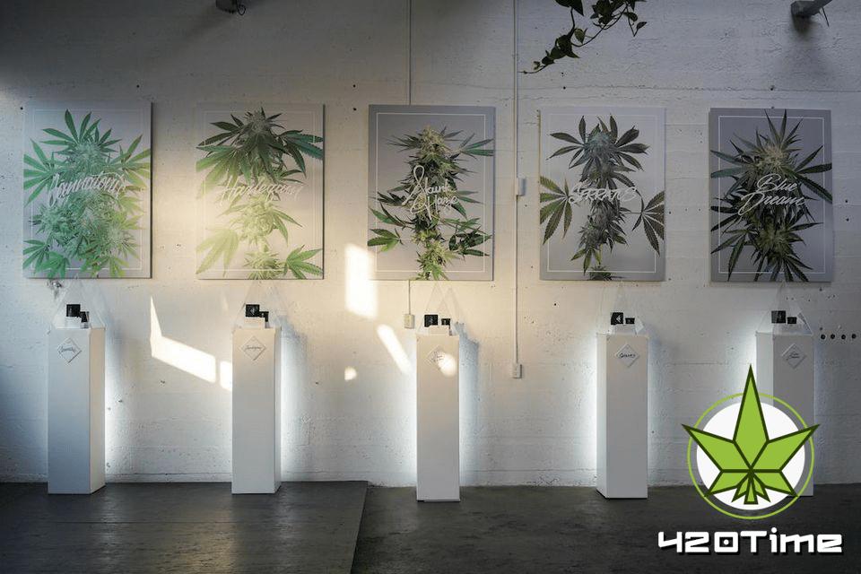 Брендинг марихуаны ориентированный на богатого потребителя