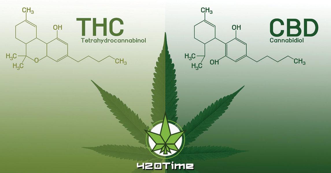 Полезные свойства марихуаны
