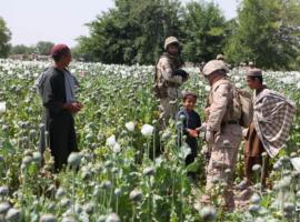 В США назвали Албанию главным поставщиком наркотиков в Европу