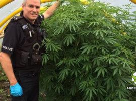 Задержанным с марихуаной полиция предложит лечение