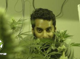 Иммигранты в США и марихуана