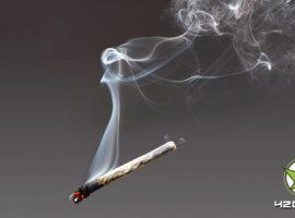 Можно ли получить передозировку от марихуаны
