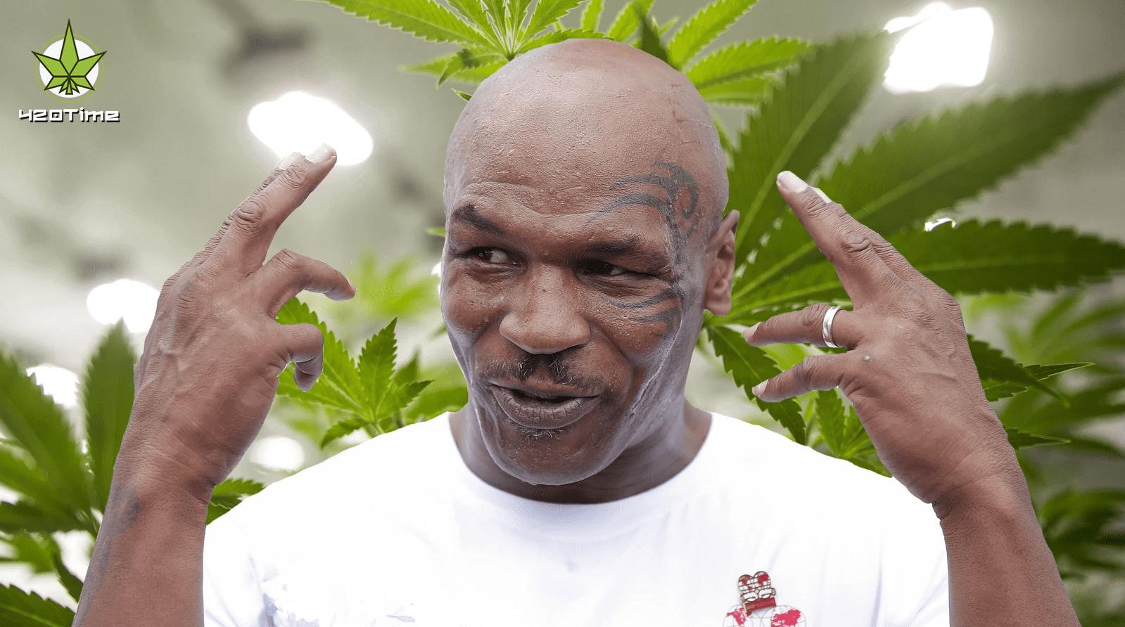 Майк Тайсон ведет переговоры с властями о отрытии курорта марихуаны на каррибах
