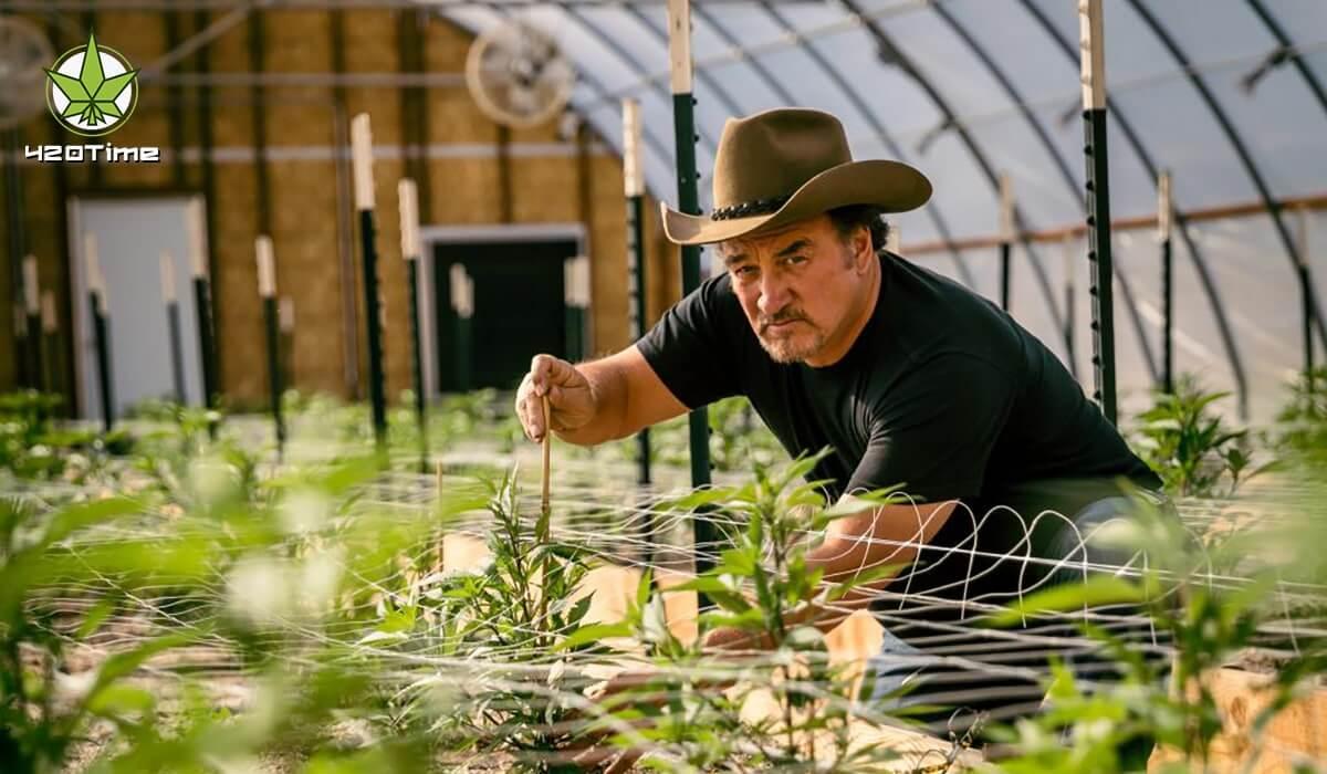 Перспективы фермерского выращивания марихуаны