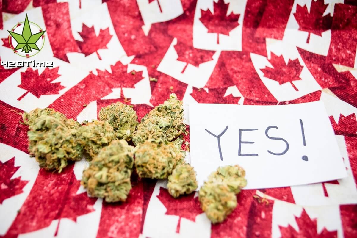 Опрос проведенный в Канаде показал, что 8 процентов компаний разрешают упореблять коноплю на работе