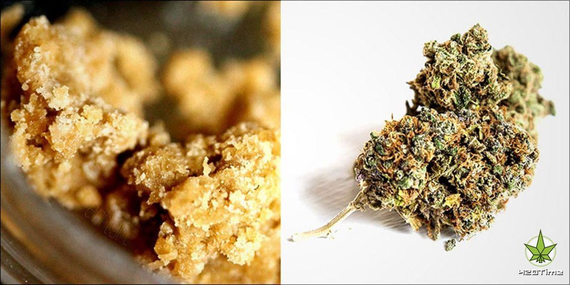 Кайф от концентрата и шишек марихуаны