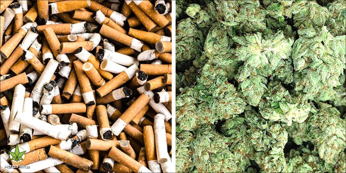 Сигареты из технической конопли без тгк вместо никотина