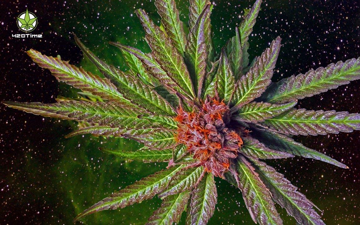 Трип от группового курения марихуаны лучше
