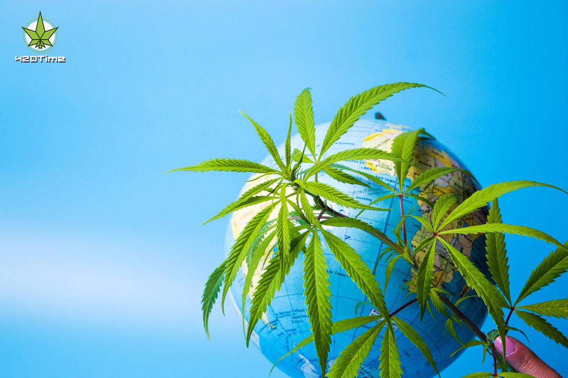 Во многих странах легализирована конопля