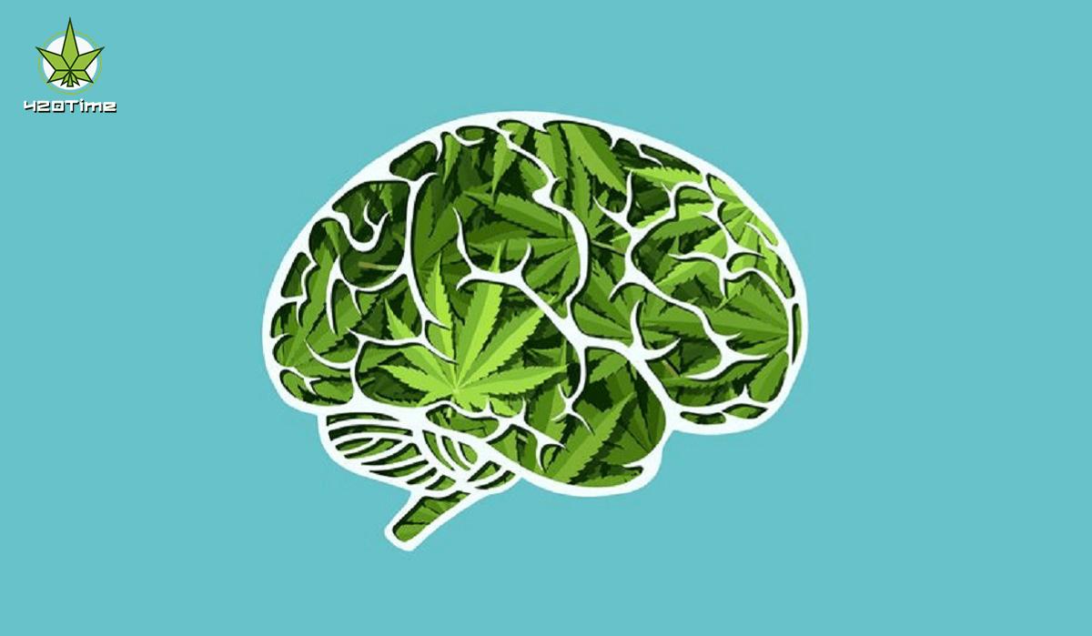 Влияние марихуаны на уровень интеллекта
