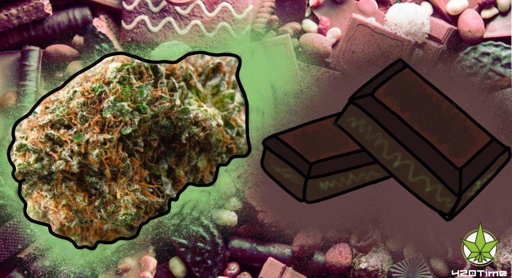 коноплянный шоколад, шоколад тз марихуаны, шоколад с ТГК